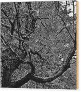 Denver Tree Fx Wood Print