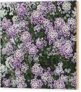 Descanso Gardens 11 Wood Print