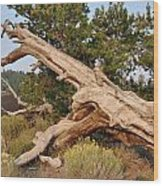 Desert Creation Wood Print