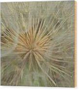 Desert Dandelion 4 Wood Print