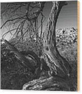 Desert Elder Wood Print