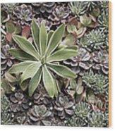 Desert Flora Wood Print