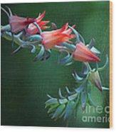 Desert Grace - Echeveria Wood Print