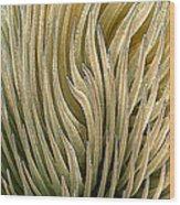 Desert Green Wood Print by Ben and Raisa Gertsberg
