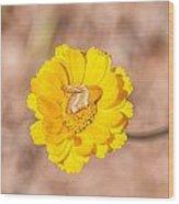 Desert-marigold Moth Wood Print