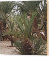 Desert Oase Camp Sinai Egypt Wood Print