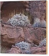 Desert Plant Life Wood Print