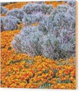 Desert Poppies And Sage Wood Print