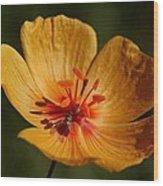 Desert Poppy Wood Print