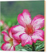 Desert Rose At Kualoa Wood Print