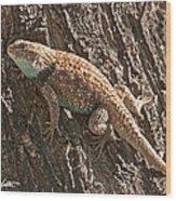 Desert Spiny Lizard Wood Print
