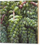 Desert Succulents 2 Wood Print