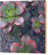 Desert Succulents Wood Print