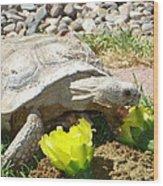 Desert Tortoise Delight Wood Print
