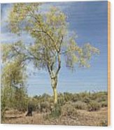 Desert Tree Wood Print by Janice Sakry