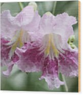 Desert Willow Wood Print