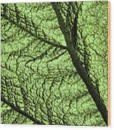Design In Nature Wood Print