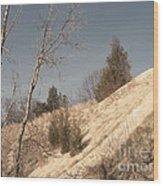 Desolate For A Season Wood Print