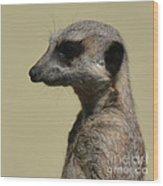 Desultory Meerkat Wood Print