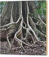 Detail Tree Roots Rain Forest Wood Print