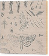 Details Of The Perfect Insect Wood Print