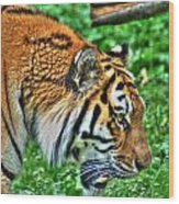 Determination In The Tigers Stare Wood Print