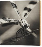 Determined Dragonfly Wood Print