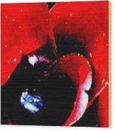 Devilish Eye Of The Bromeliad Wood Print