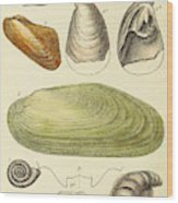 Devonian Fossils, Illustration Wood Print
