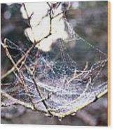 Dew Covered Spiderweb Wood Print by Julie Cameron