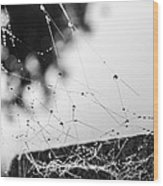 Dew Covered Web Wood Print