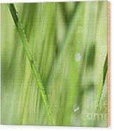 Dew Drops In Long Sunlit Grass Wood Print by Natalie Kinnear
