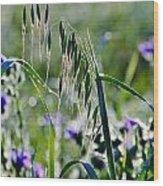 Dew Drops On Grass Wood Print