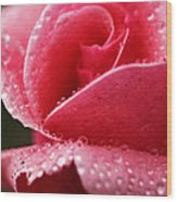 Dew Drops On Pink Wood Print
