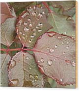 Dew Drops On The Rose Leaves Wood Print