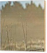 Dew Fog And Grasses Wood Print