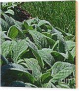 Dew Kissed Foliage Wood Print