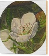Dew Of Pear's Blooms Wood Print