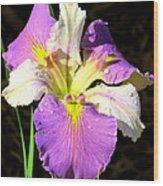 Dew On An Iris Wood Print