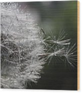 Dew On Dandelion Wood Print