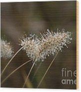 Dew On Ornamental Grass No. 2 Wood Print