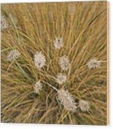 Dew On Ornamental Grass No. 3 Wood Print