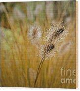 Dew On Ornamental Grass No. 4 Wood Print