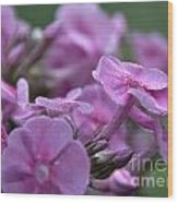 Dew On Phlox Wood Print