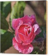 Dew Rose Wood Print