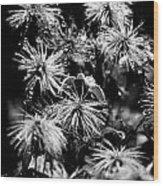 Dew That Found Wood Print