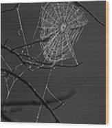 Dew Web-signed-#3322 Wood Print