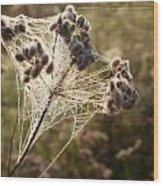 Dewdrops On A Web Wood Print