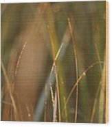 Dewy Grasses Wood Print