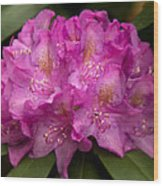 Dewy Rhododendron Wood Print